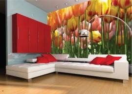 AG Design Fotobehang Tulpen FTS0045