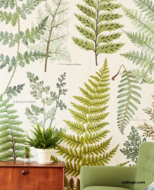 Eijffinger Geonature Wallpower 366104 Hebarium Green