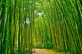 Papermoon Fotobehang Bamboo Forest 97046