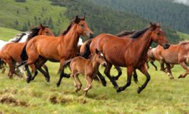 Papermoon Fotobehang Vlies Wilde paarden 18324