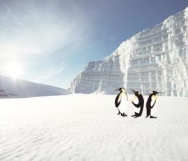 Eijffinger Wallpower Junior 364145 Polar Pinguins