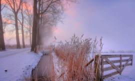 Noordwand Holland Fotobehang Winterochtend III 9890