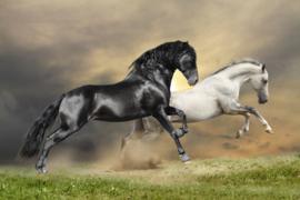 Papermoon Fotobehang Vlies  Zwart, witte paarden 18334