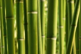XXL Wallpaper Bamboo 0310-5