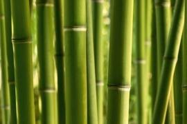 XXL Wallpaper Bamboo 0310-5