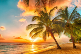 Papermoon Fotobehang Barbados Palm Beach 97049