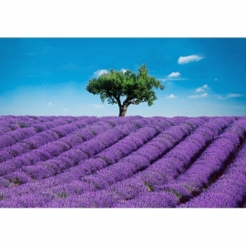 Idealdecor Provence 144