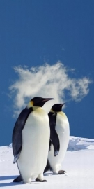 Dutch DigiWalls Fotobehang 70026 Pinguins