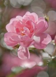 Komar Fotobehang Bouquet 4-713