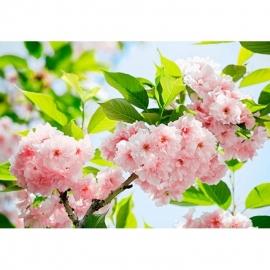 Idealdecor Sakura Blossom 133