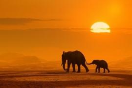Dutch DigiWalls Fotobehang 70011 Olifanten bij zonsondergang