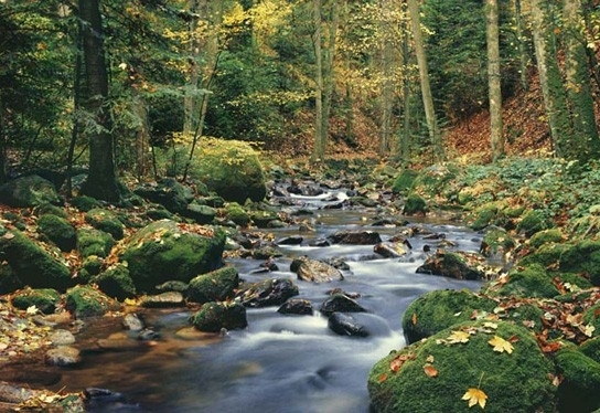 Idealdecor Forest Stream 278
