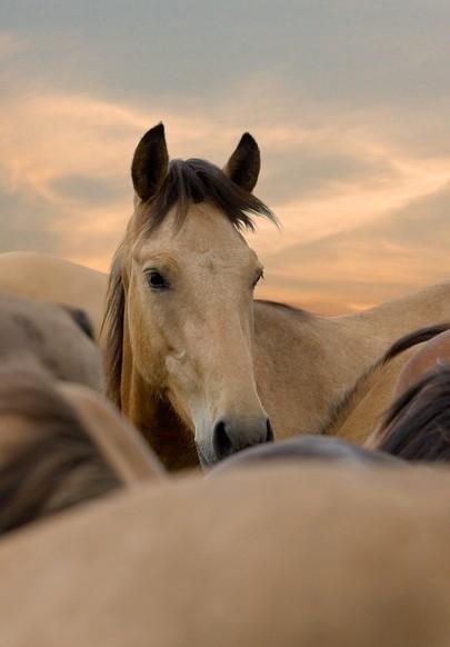 No Limits Fotobehang I love my horse 30022