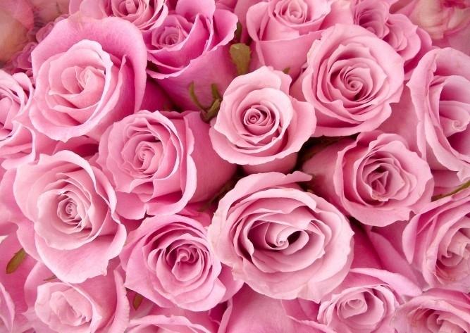 No Limits Fotobehang Roses 30021
