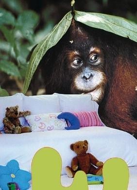 Evolution The Great Zoo Fotobehang Monkey 1005