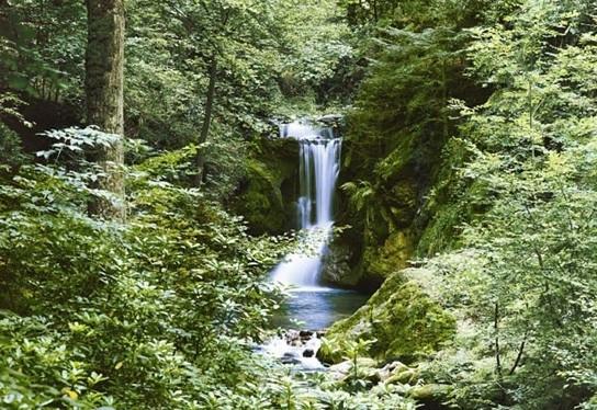 Idealdecor Waterfall in Spring 279