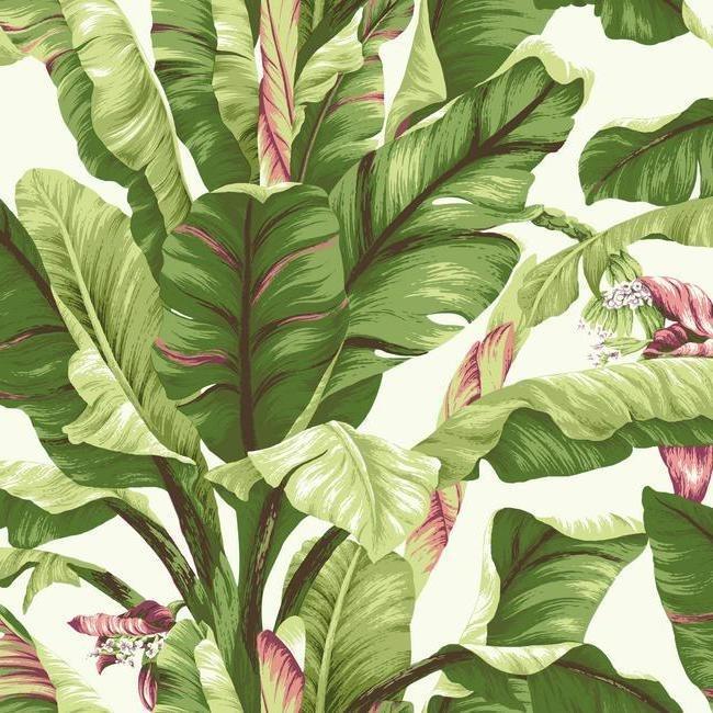 York Wallcoverings Ashford Tropics behang AT7067 Banana Leaf