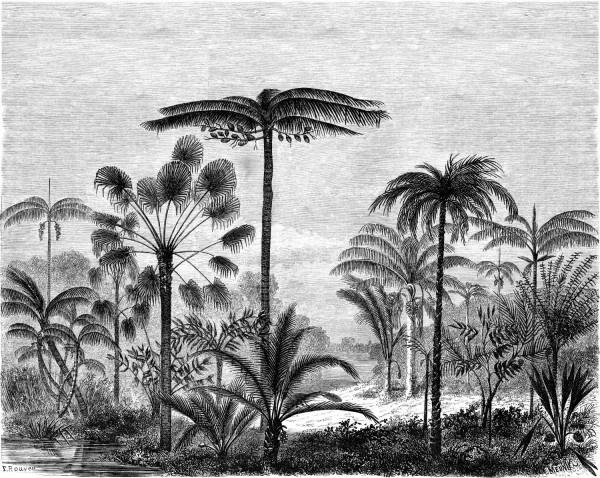 Esta Home Paradise PhotowallXL Palm Trees Engraving 158952