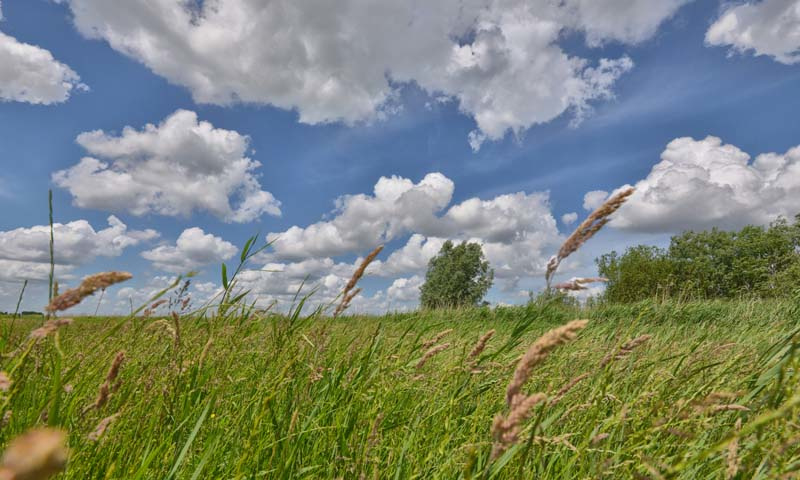 Noordwand Holland Fotobehang Eemland Grasland 2166
