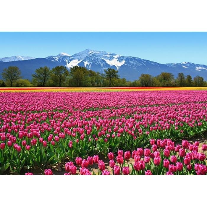 Idealdecor Tulips 137