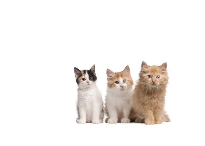 No Limits Fotobehang Cute kittens 30015