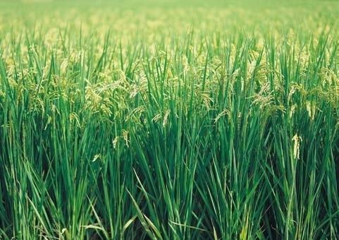 XXL Wallpaper Grass 0311-3