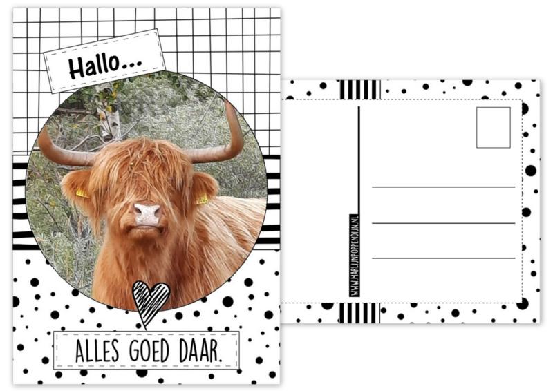 A6 Kaart met afbeelding hooglander met tekst ''Hallo alles goed daar''. A6 Kaart met afbeelding hoogland
