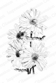 IO Stamps Daisies J7002