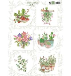 MD Herbs & leaves 2 EWK1255