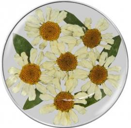 Groene Flora Insignia Munt van MY iMenso 33-1176