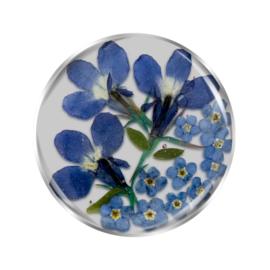 Blauwe Flora Insignia Munt van MY iMenso
