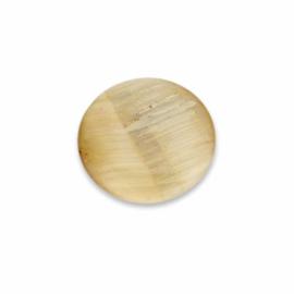 Bruine Oblique Schelp Abalone Munt van MY iMenso