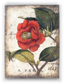 T404 Red Camellia Sid Dickens tegel