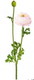 Ranonkel Sia roze