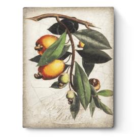 T446 Cashew Apple Sid Dickens Tegel