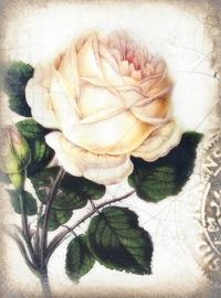 T374 Sweet Rose Sid Dickens Tegel