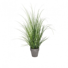 Onion grass potted hoogte 74 cm SIA 170067