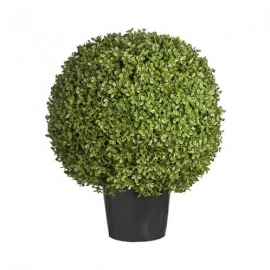 Buxus Boxwood potted  H58 cm SIA 050173
