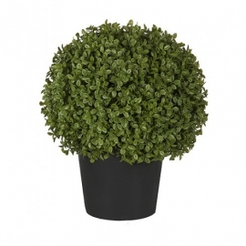 Buxus Boxwood potted H35 cm SIA 050145