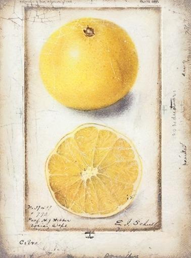 T 371 Citron Sid Dickens Tegel bij Jolijt
