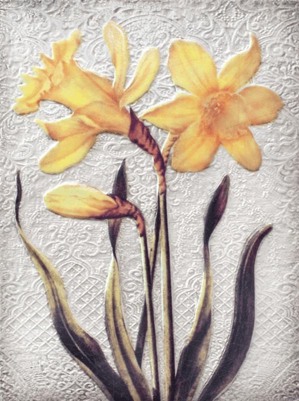 T509 Daffodils (Orange) Sid Dickens Tegel