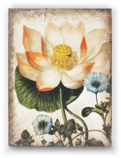 T407 Sacred Lotus Sid Dickens Tegel
