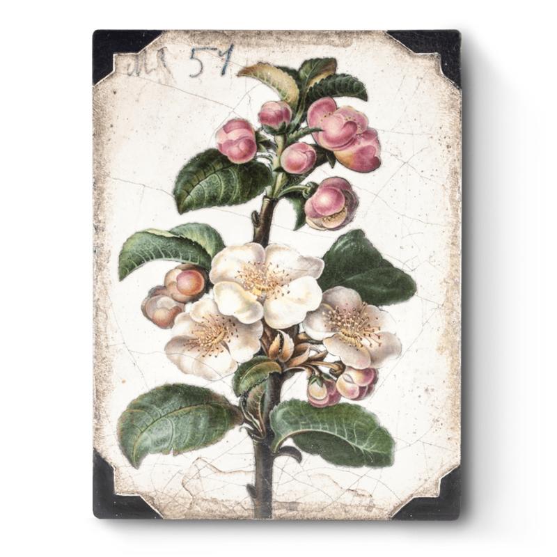 T462 Apple Blossom Sid Dickens Tegel