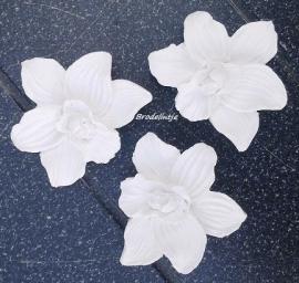 **Nieuw** Mal Mini Orchidee`s(3)