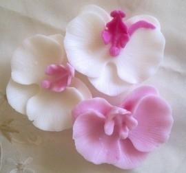 **Nieuw** Foodsafe Mal Orchidee