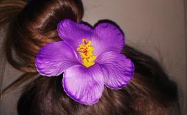 Geweldige Hibiscus Hawaïbloem 9 cm op clip paars