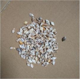 Kraal schelpje 10 mm