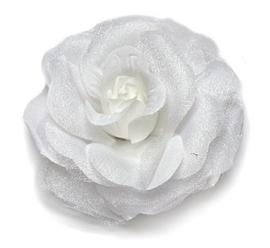 Grote roos op klem wit