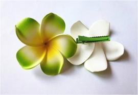 Superleuke Plumeria Hawaïbloem 8 cm op clip groen met geel