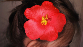 Geweldige Hibiscus Hawaïbloem 9 cm op clip rood